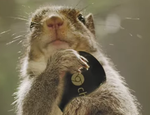 [April Fools] The Chromecast Is Perfect For Squirrels, May Contain Nuts