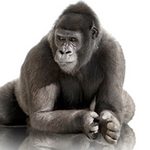 Corning Announces Gorilla Glass 4, Claims Twice The Strength Of Competing Glass