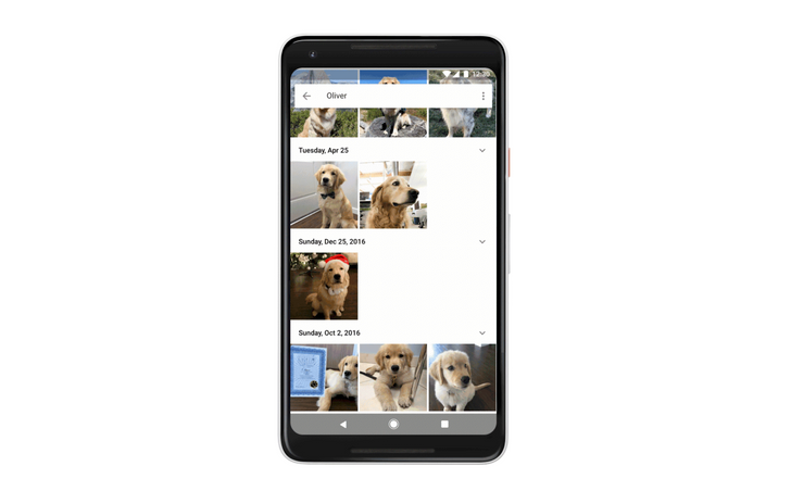 Google Photos is rolling out identification and photo grouping for your dogs and cats