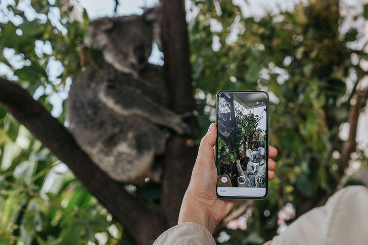 Google's new Aussie AR animals include adorable 3D koalas, kangaroos, and quokkas