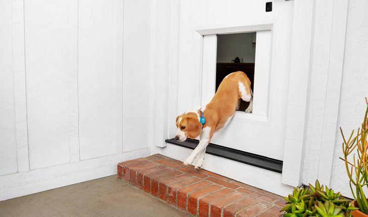 Smart garage door maker announces $3,000 pet door